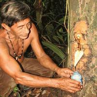 Получение копайского бальзама