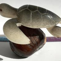 Чёрная морская черепаха